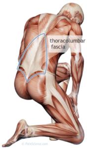 fascia thoracolumbar